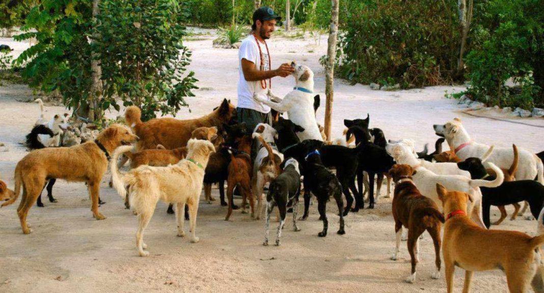 Un homme ouvre sa maison pour mettre 300 chiens à l'abri d'un ouragan :