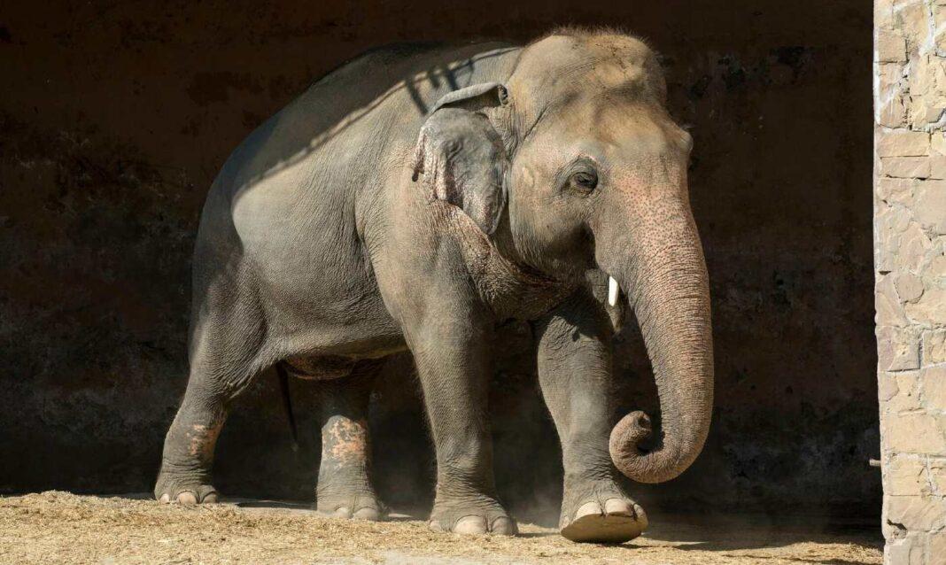 Kavaan, l'éléphant le plus solitaire du monde, a enfin trouvé un nouveau foyer et a reçu des câlins de Cher et de son nouveau copain Pachyderme