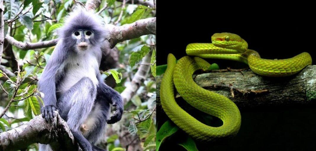 Les 10 espèces les plus découvertes en 2020 comprennent un serpent de Harry Potter et des brocolis du désert