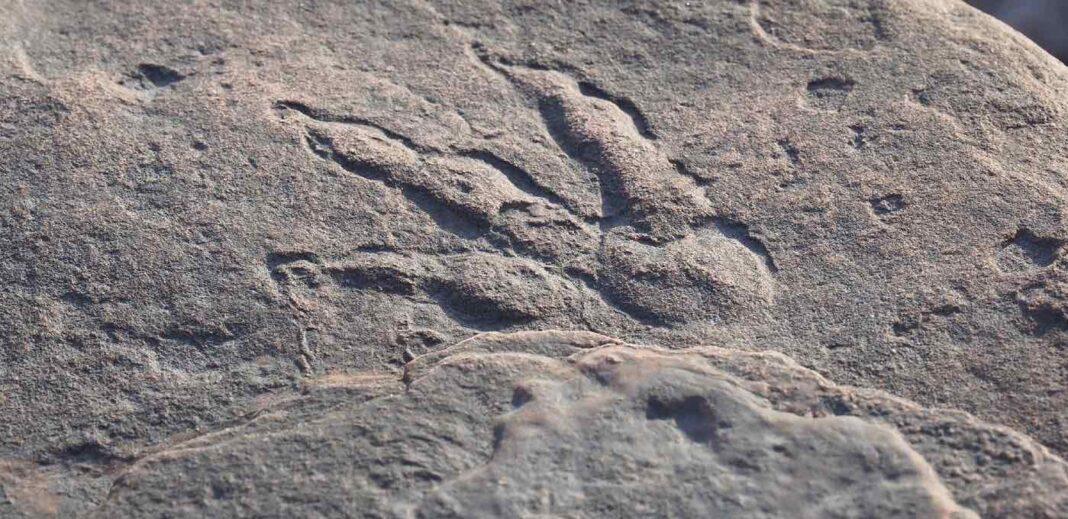 Une fillette de 4 ans trouve l'empreinte d'un dinosaure sur une plage il y a 215 millions d'années