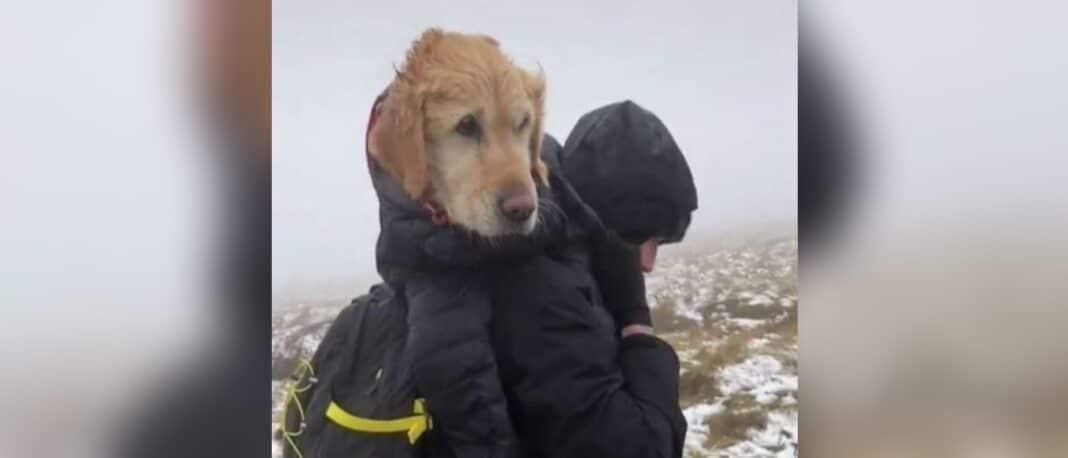 Des randonneurs bravent des kilomètres de sentiers de montagne glacée après avoir sauvé un chien en détresse pendant deux semaines
