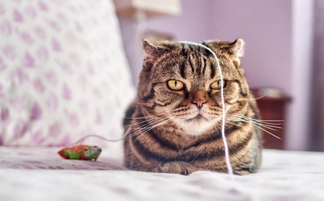 L'ADN ancien montre que les chats se sont domestiqués - Pourquoi ne sommes-nous pas surpris ?