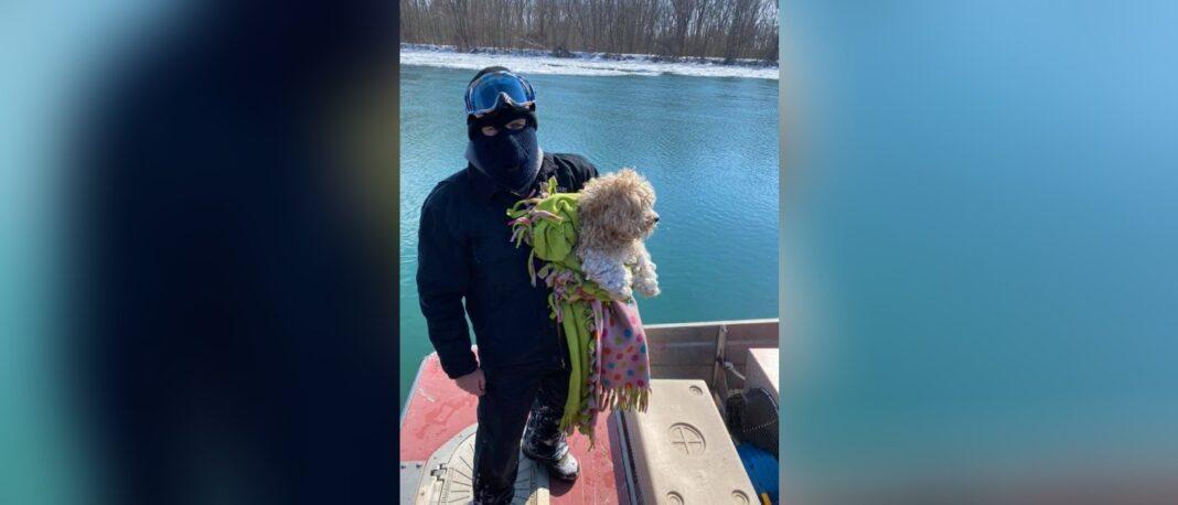 Un chien sauvé d'une rivière gelée après 4 jours est adopté par un sauveteur - et reçoit un nouveau nom :