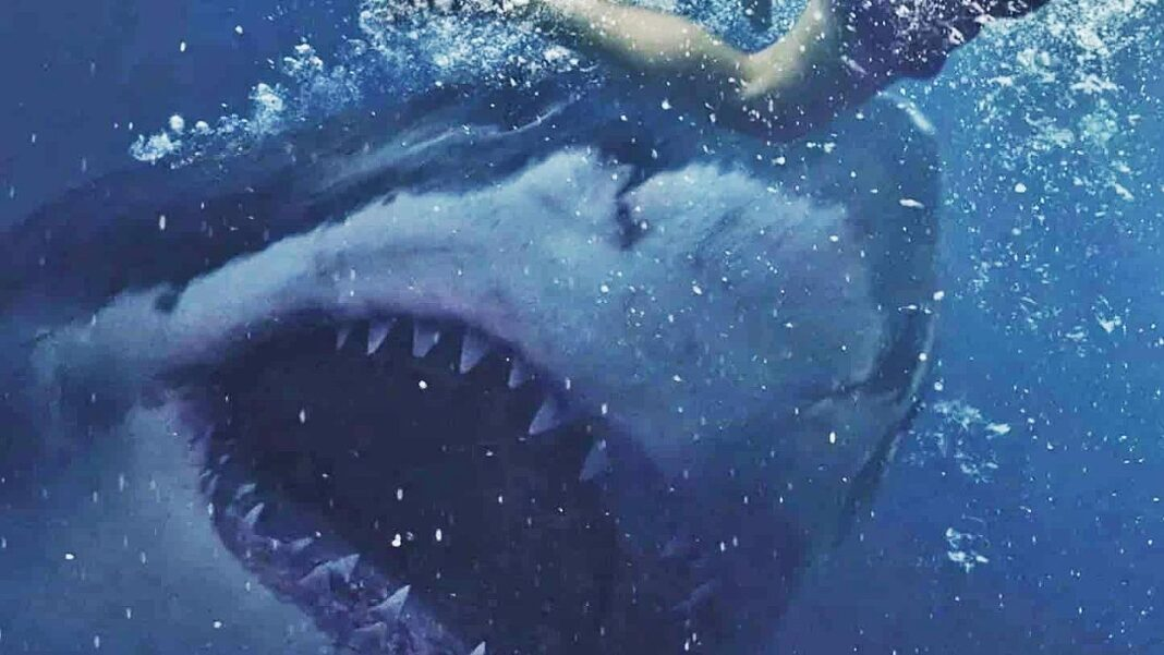Great White, le nouveau film sur les requins, sortira en juillet en vidéo à la demande.