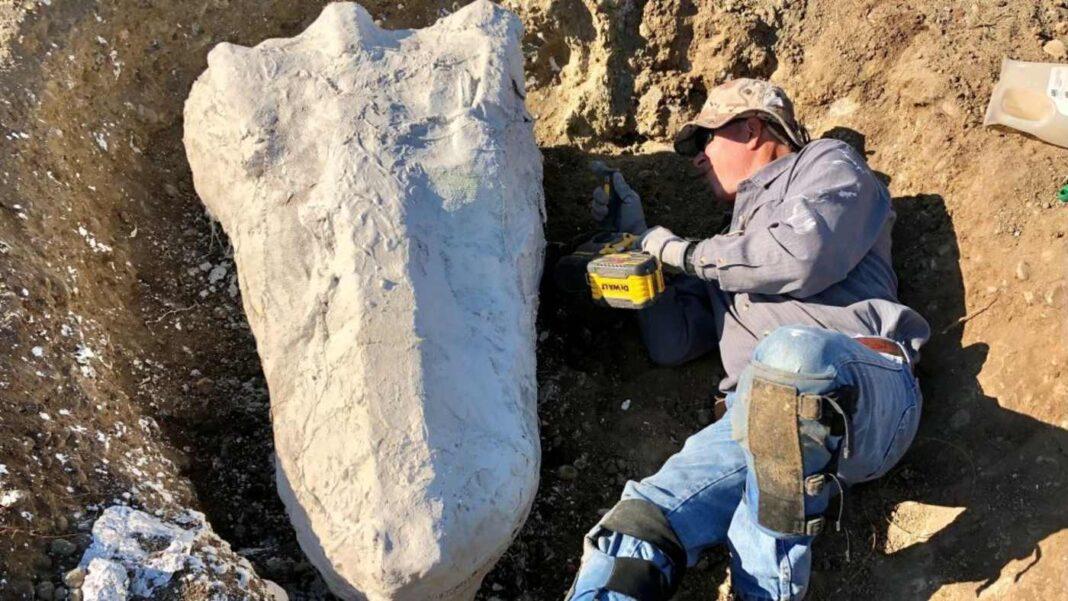 Découverte étonnante de fossiles en Californie après qu'un homme a examiné de près un arbre pétrifié et trouvé des ossements de grands animaux