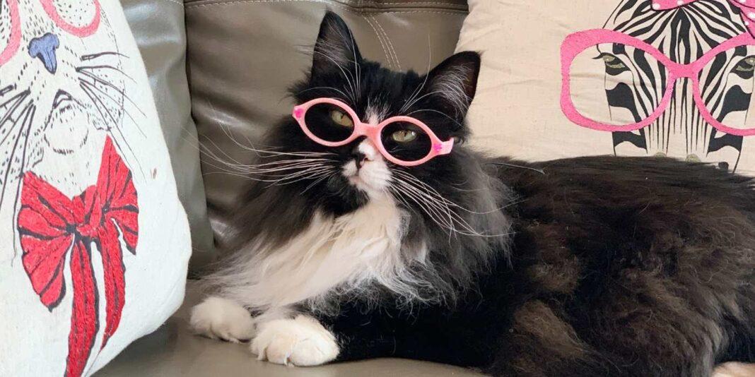 Un chat de soutien fringant aide les enfants souffrant de problèmes oculaires à avoir confiance dans le port de lunettes.