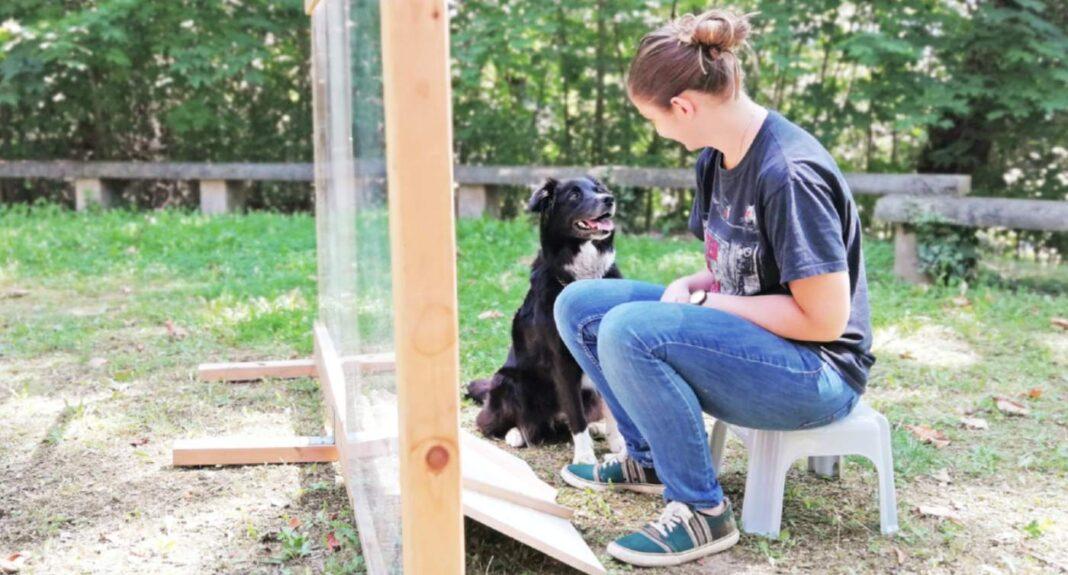 Les chiens savent quand vous agissez intentionnellement, selon des chercheurs