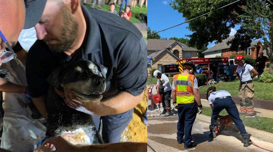 Les pompiers parviennent enfin à atteindre un chien sourd coincé dans un collecteur d'eaux pluviales après 10 heures de tentatives