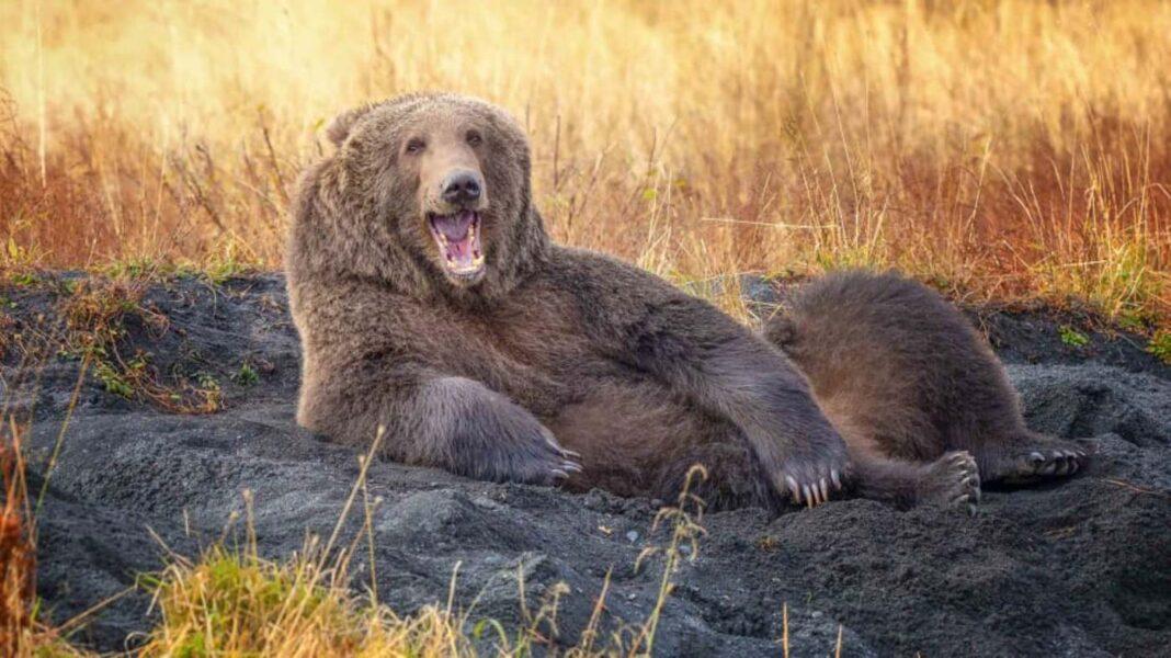 Des ours effrontés aux spermophiles loufoques, découvrez les finalistes amusants des Comedy Wildlife Photo Awards.