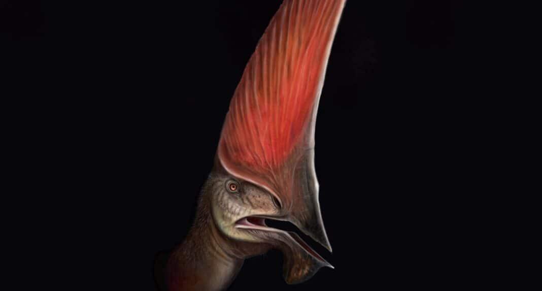 Le squelette presque complet d'un ptérosaure découvert lors d'une descente de police révèle des détails étonnants sur l'espèce.