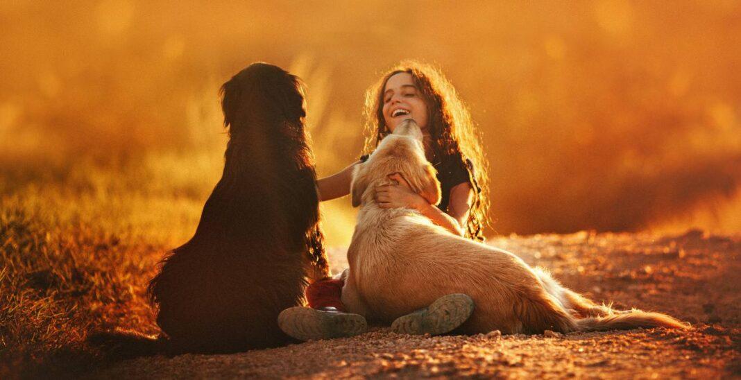 Pourquoi les animaux jouent-ils ? Parce qu'ils ont besoin de jouer, tout comme les enfants.