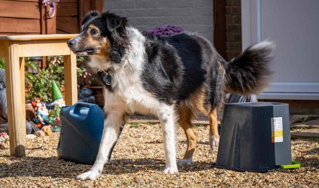 Elle n'avait aucune idée que son chien était totalement aveugle - Le vétérinaire déclare que son aptitude aux courses d'obstacles est un